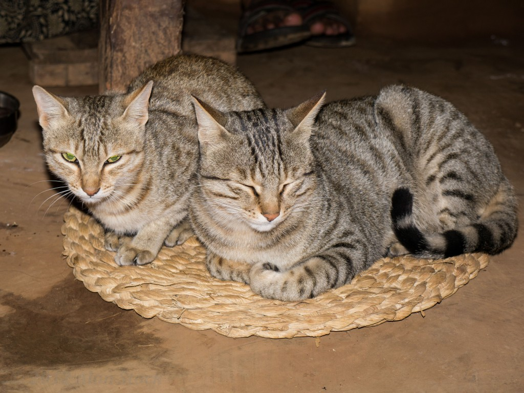 The house cats curl up by the fire
